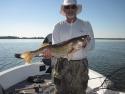 28.5 inch walleye